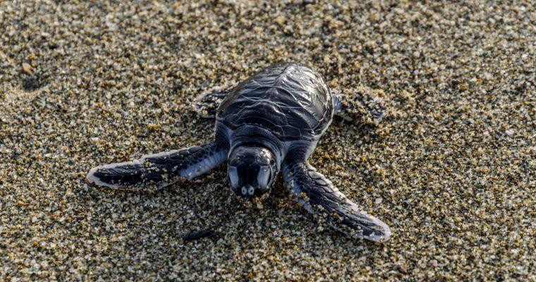 Sukamade Turtle Beach: A highlight of our Java trip