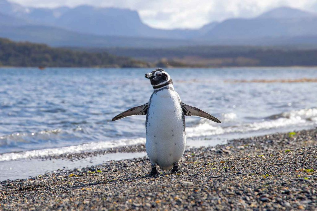 Hopefully we'll spot some penguins in Argentine Patagonia - The final stop on our RTW trip itinerary