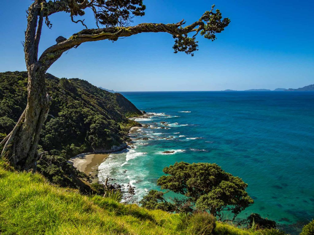 View from the Mangawhai Cliff Top Walk in Northland, New Zealand