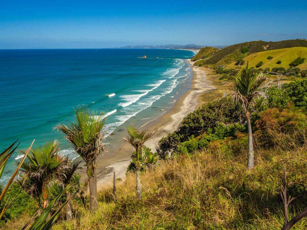 Ảnh ở New Zealand: Cảnh đi bộ trên vách đá Mangawhai