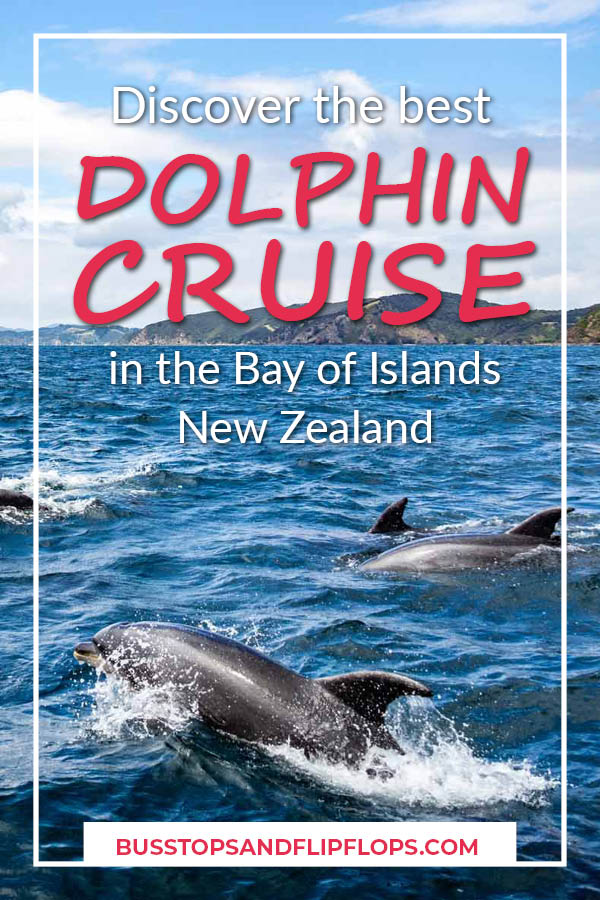 We had an awesome Bay of Islands dolphin cruise in New Zealand. On a beautiful catamaran we set out on the seas to spot bottlenose dolphins. Read all about our adventure!