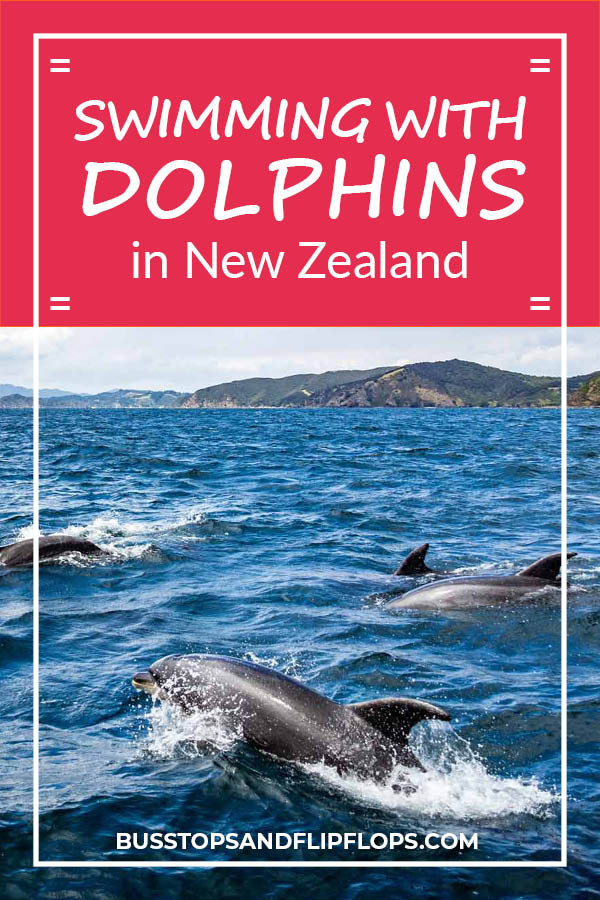 During our travels in New Zealand one of our big wishes was swimming with dolphins. Read all about our dolphin cruise adventure in the Bay of Islands and find out if we met our goal!