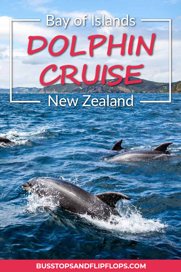 At the Bay of Islands in the north of New Zealand we had a great encounter with a pod of Bottlenose dolphins. Read about how we set out on a catamaran to explore the seas!