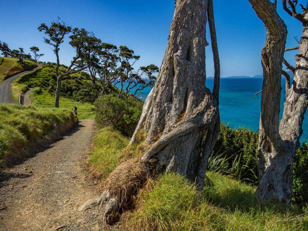 Manghawai Clifftop Walk New Zealand
