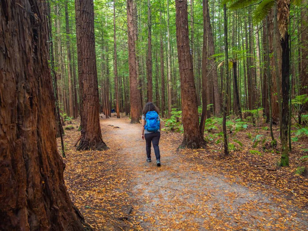 Redwood Forest Walk Rotorua - New Zealand North Island Hikes