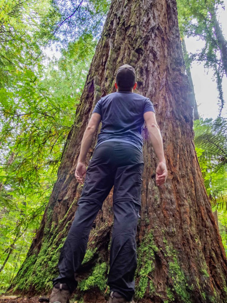 Rotorua things to do: Redwood forest walk