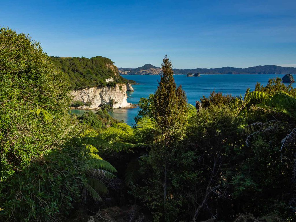 View during the hike to Cathedral Cove in New Zealand