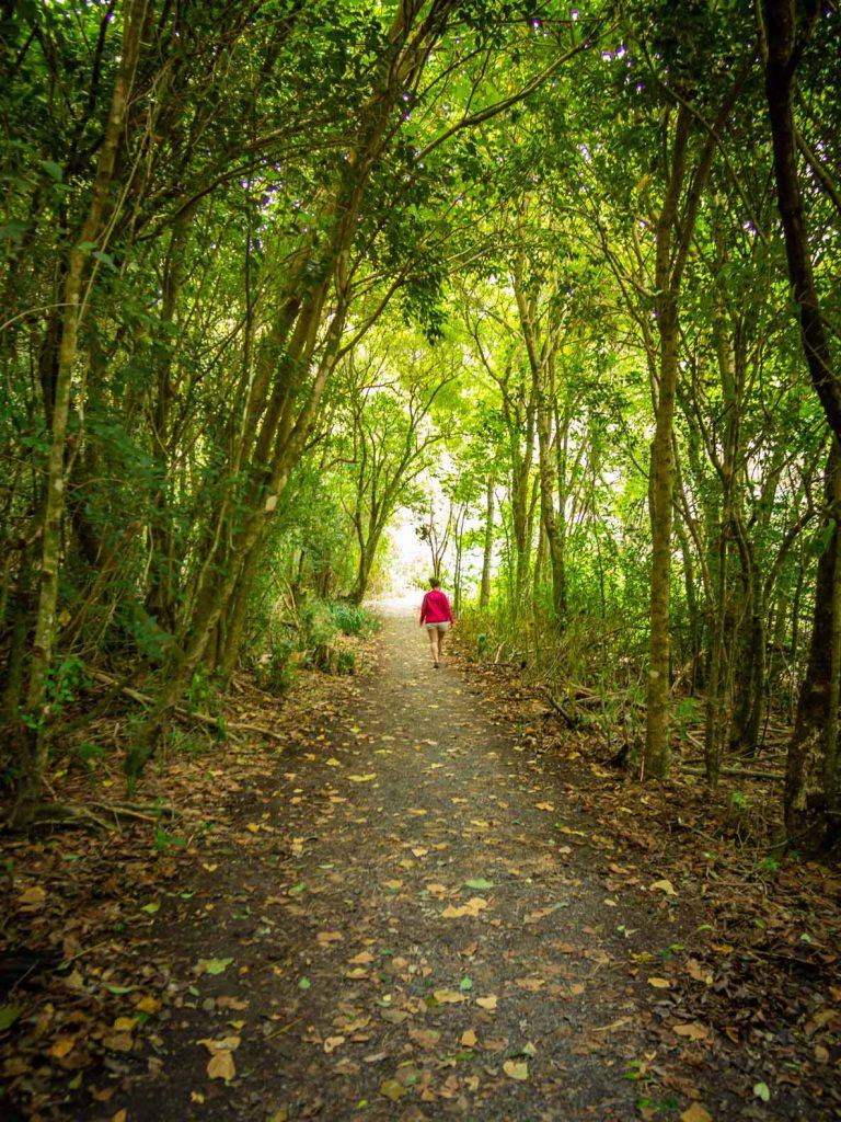 New Zealand North Island hike: Haruru Falls Track