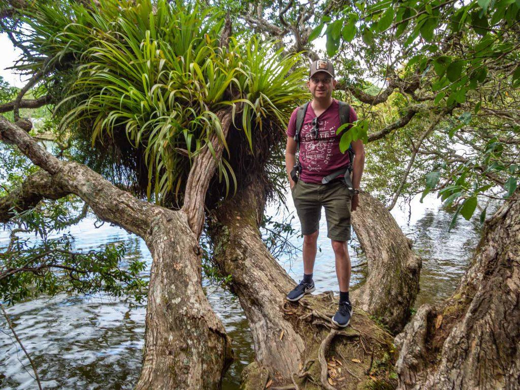 Haruru Falls Track - North Island Hikes