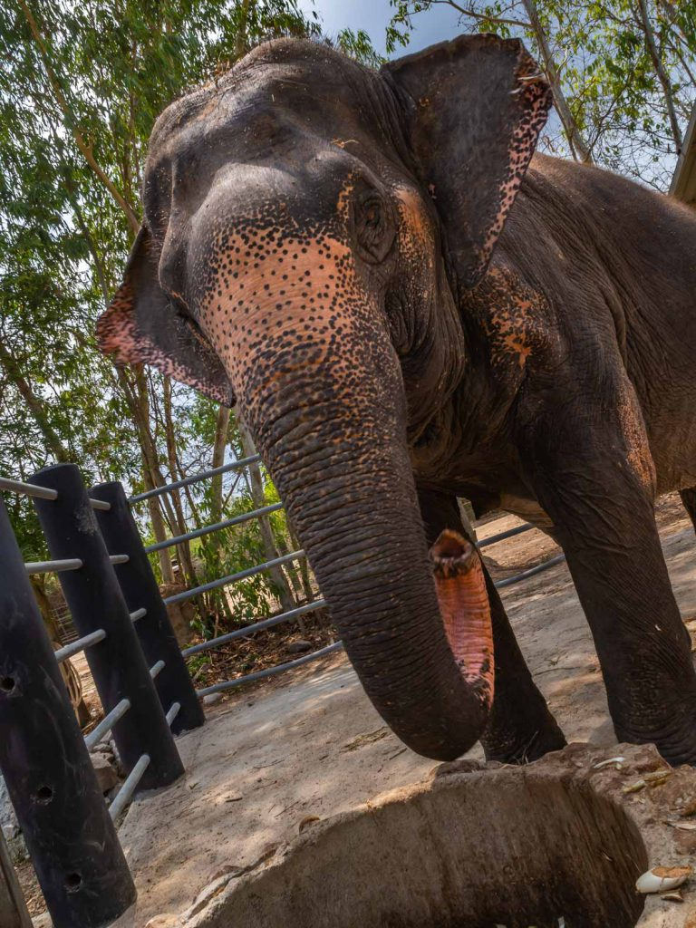 Ethical elephant visit in Hua Hin - South Thailand Itinerary