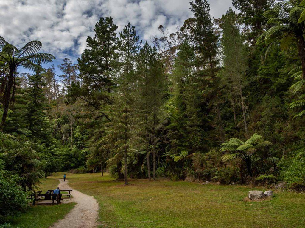 New Zealand Hikes - Redwood Forest Rotorua