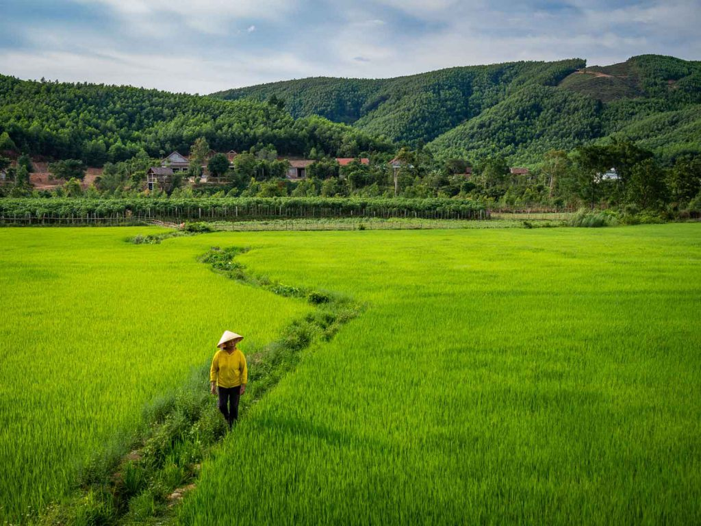 We didn't expect to find these gorgeous rice fields in Bong Lai valley!