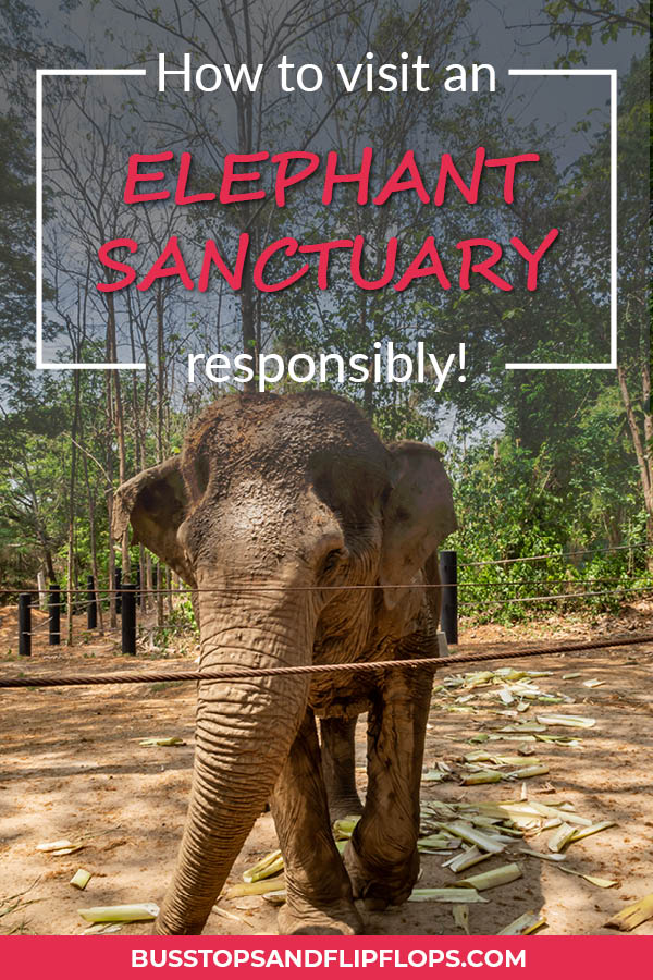 Elephants are really awesome, right? In Thailand you have loads of opportunities to see, touch, feed and ride them. But many of the elephants are exploited for tourism. Check out our blogpost about how to practice good elephant tourism and select a responsible elephant sanctuary in Thailand.