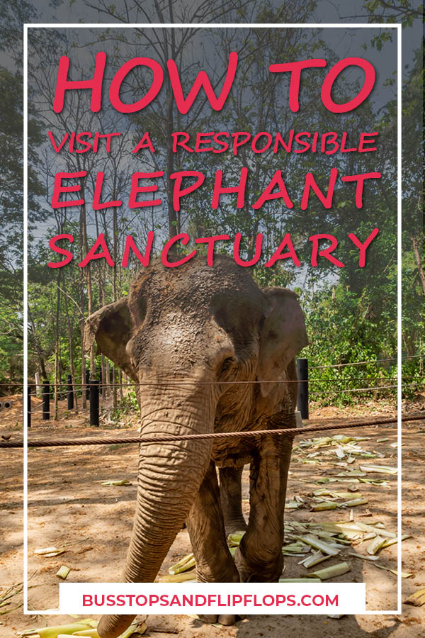 If you're going to Thailand you are bound to encounter captive elephants. Many of them are maltreated just to make a quick buck off of tourism. How do you pick a responsible elephant experience, without contributing to malpractices? Read our blogpost on tips on how to select a responsible elephant sanctuary in Thailand and the experience we had!