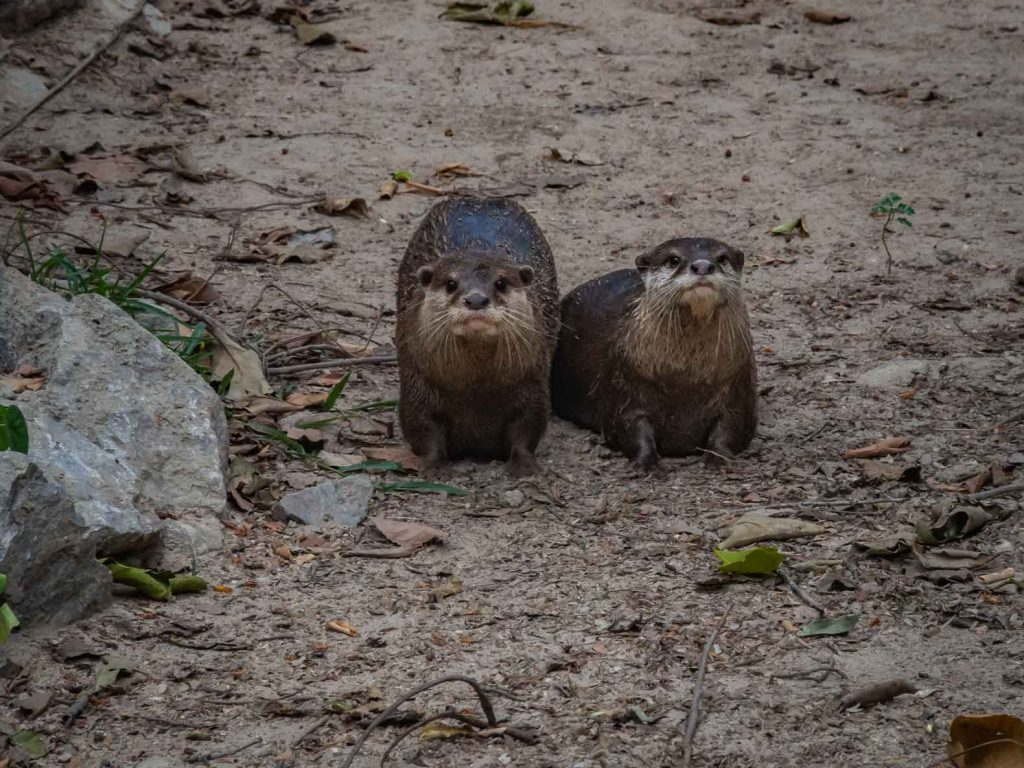 Otters at the WFFT center