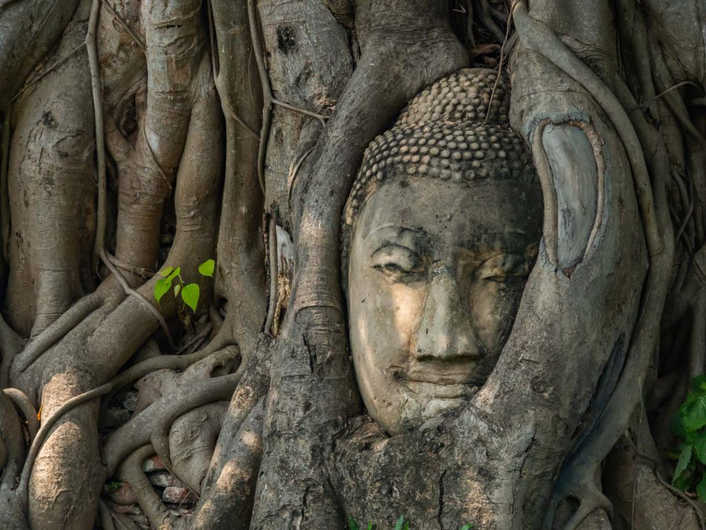 The buddha face in the tree at the Wat Mahathat temple complex in Ayutthaya historical park