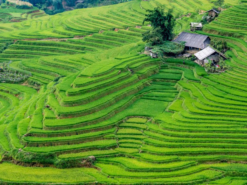 First view of the rice fields on our two day trekking in Sapa