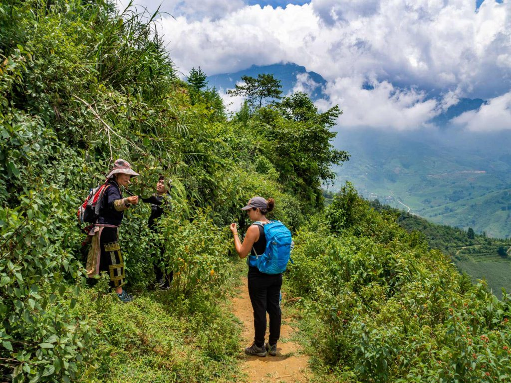 Sapa Trekking: guide explaining about edible plants