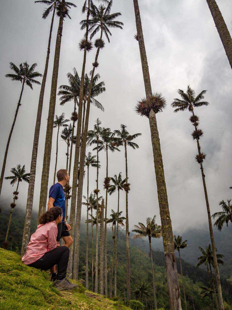 Valle de Cocora - Most popular Salento Activities