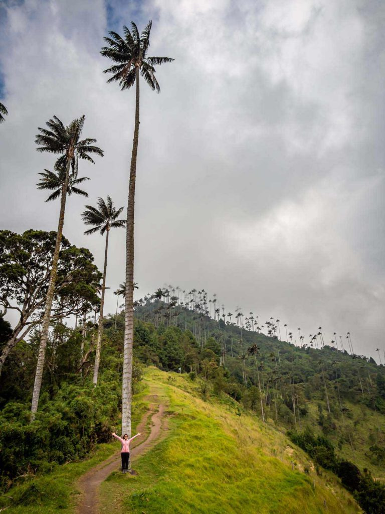 Wax Palms in Valle de Cocora